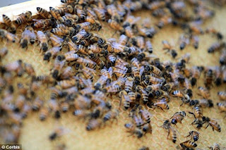 Killer Bees Kill Horses In Terrifying North Texas Attack