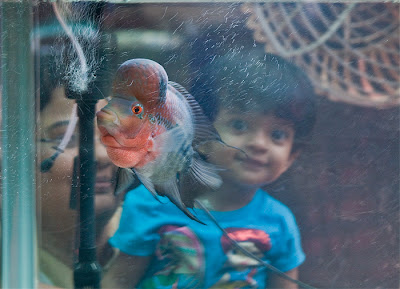 Fresh Water Fish Keeping