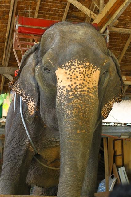 Menunggang Gajah di Patong Beach Phuket