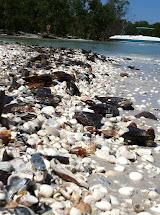 Seashells And Salty Air Barefoot Beach Preserve