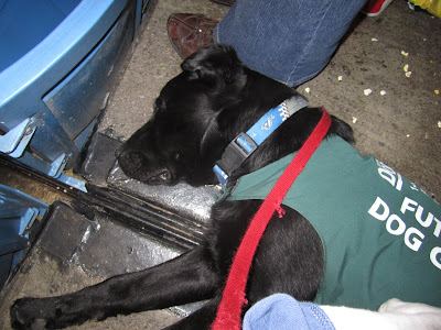 Black lab puppy Romero is lying on his side, asleep on the concrete floor of the 500 level stands at the Rogers Centre. He is wearing his green Future Dog Guide jacket, his Blue Jays collar, and a red leash that drapes over his shoulder. His face is completely relaxed, his top ear is flopped over the top of his head, and his front legs are stretched in front of him. Behind Romero's head, you can see the legs of the person in the seat next to him, as well as a fair bit of popcorn kernels and other garbage littering the ground.
