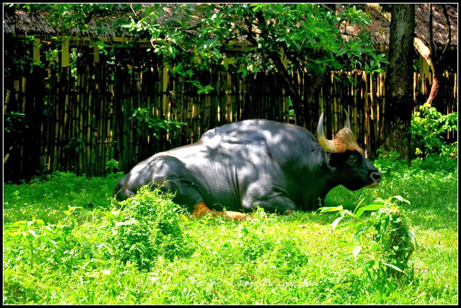 Vojens drøm kolding zoo