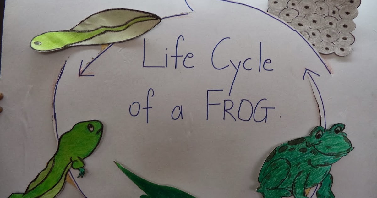 RCIS-PP : Foundation : Life cycle of a frog