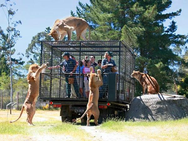 Este zoológico de Nueva Zelanda sí sabe quién debe ir en jaulas