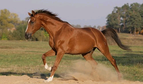 Клички коней список Клички знаменитых лошадей