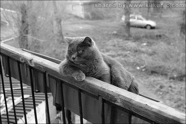 http://3.bp.blogspot.com/-ajUltVmuIKk/TXhN2xmVdkI/AAAAAAAAQjw/c1g7yEeqtJo/s1600/these_funny_animals_635_640_10.jpg