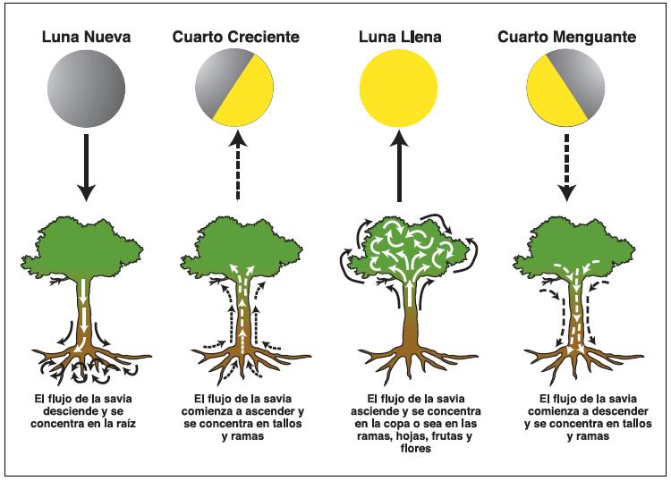 S O S Cannabis Uruguay La Luna Y Sus Influencias En El