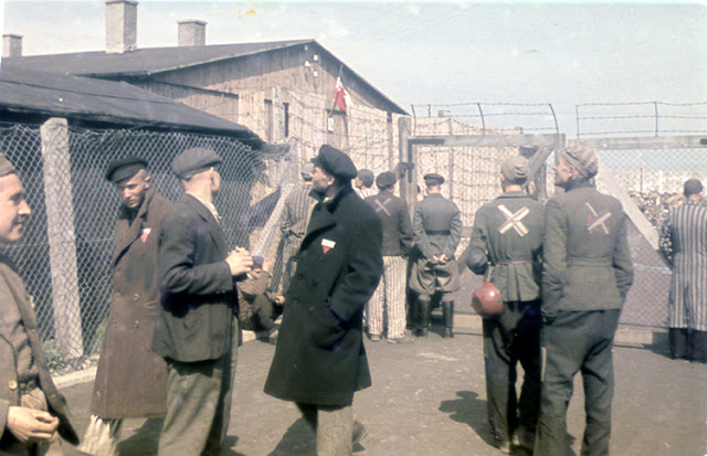 life in the nazi concentration camps Titled concentration camps for dogs, and featuring unforgettable pictures by life's stan wayman, the eight-page exposé cast a cold light on a shadowy — but, at.