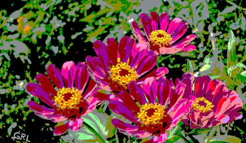 an original fine digital painting, ZINNIAS II FLORIDA.