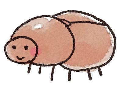 カブトムシのメスのイラスト(虫)