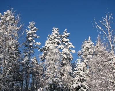 kaunis talvipäivä