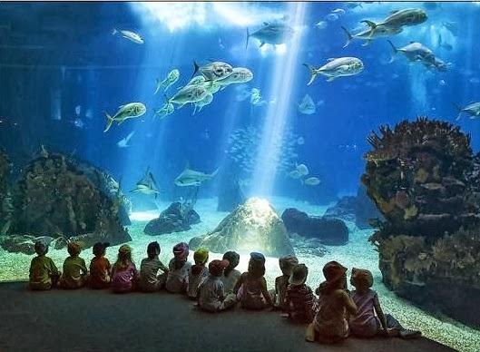 حديقة الفوكيت للأحياء المائية