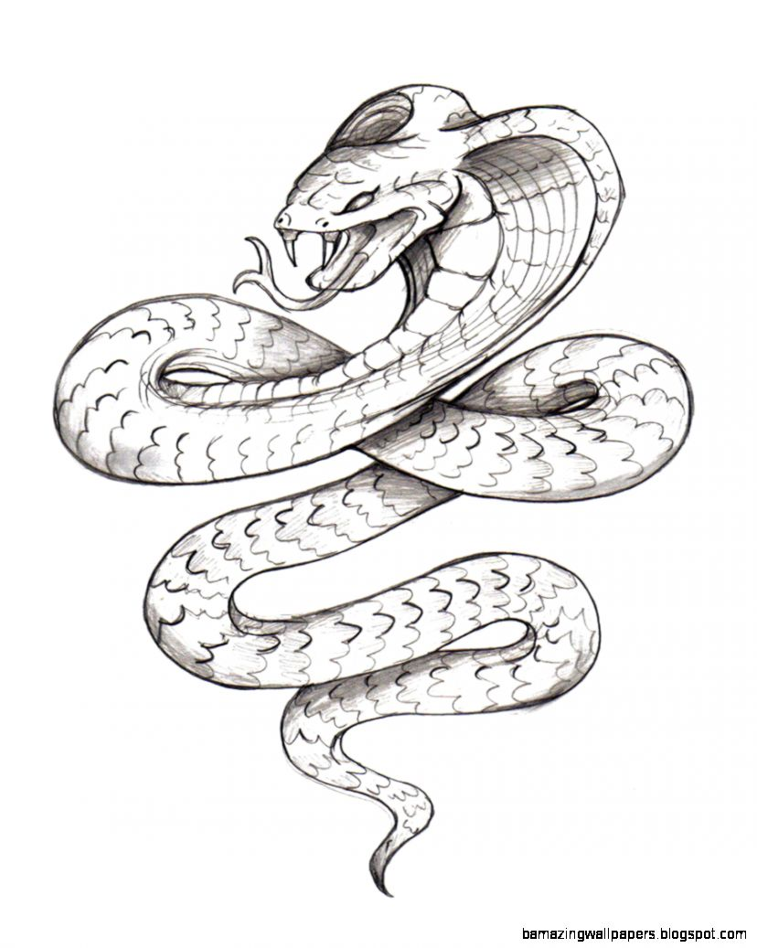 Gallery For gt Realistic Snake Drawing