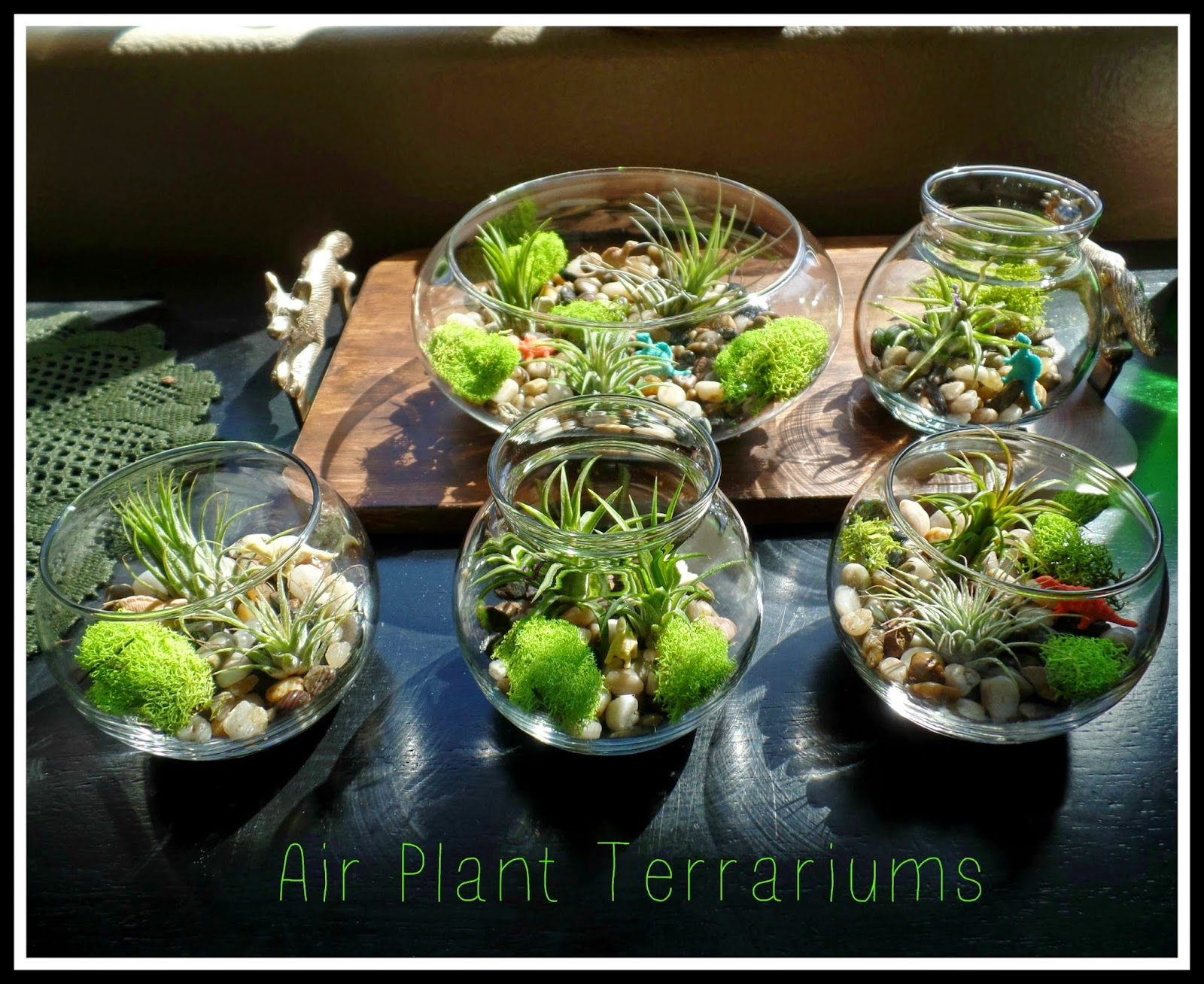april 39 s homemaking easy air plant terrariums. Black Bedroom Furniture Sets. Home Design Ideas