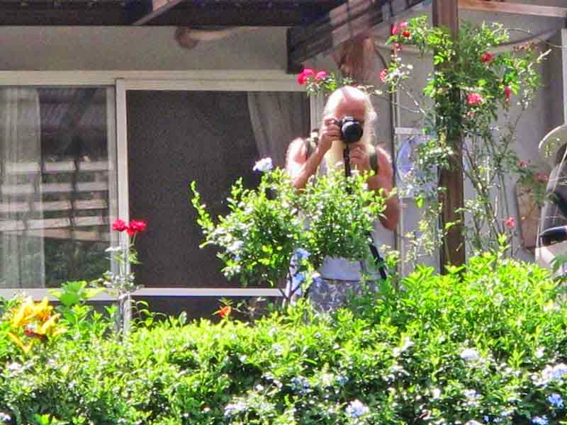 photographer taking flower photos