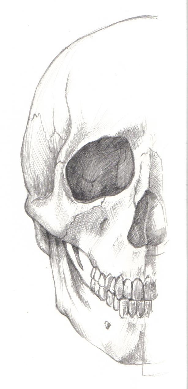 Raquel Montoya: Dibujo de anatomía: cráneo