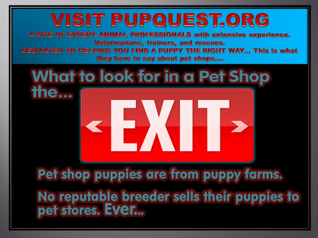 Visit PUPQUEST.ORG for expert knowledge and advice