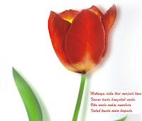 bunga lambang cinta untuk ungkapkan perasaan hati kepada kekasih