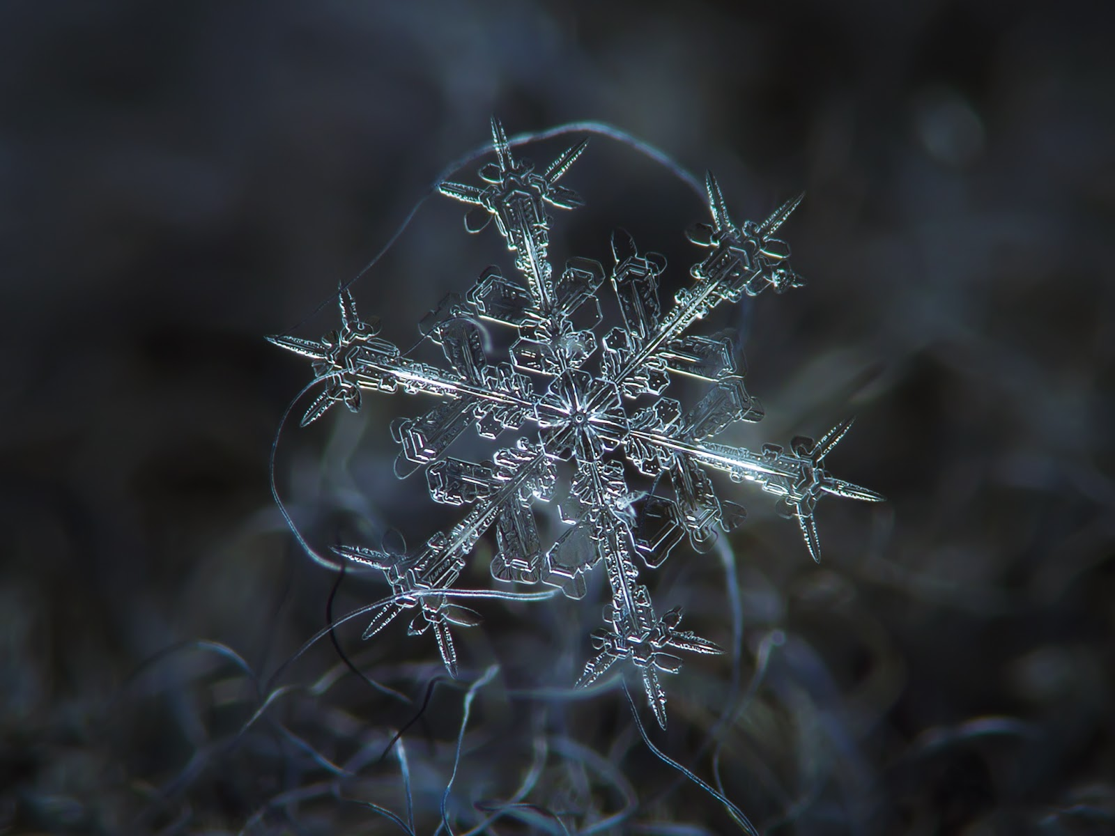 photography snowflakes by alexey kljatov art for your