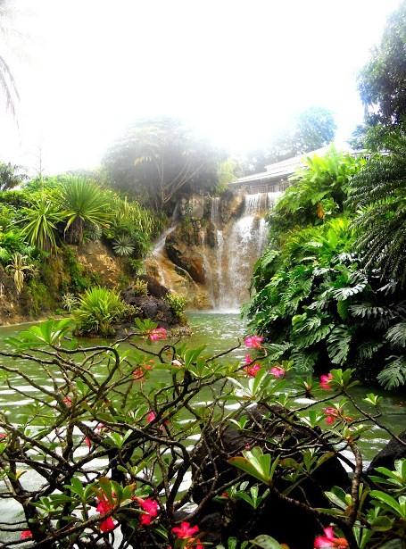 Les petits paradis de manon jardin botanique de deshaies for Jardin botanique deshaies