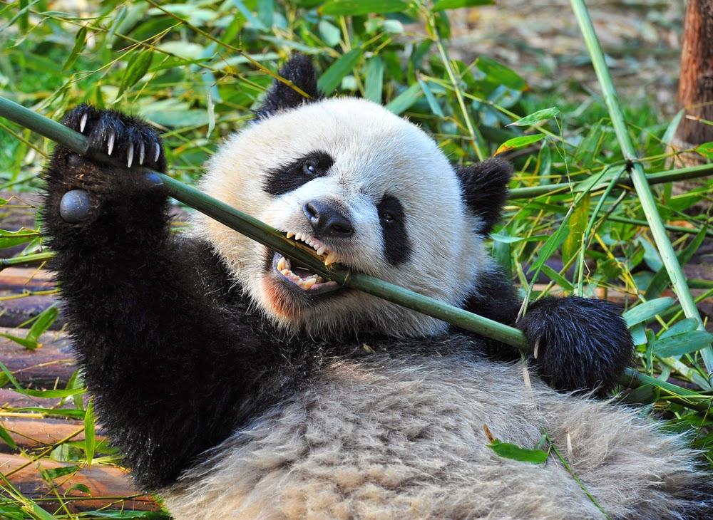 Algoritma Google Panda 4.0