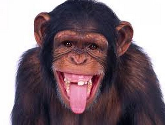 Pelecehan seksual oleh monyet di inggrish