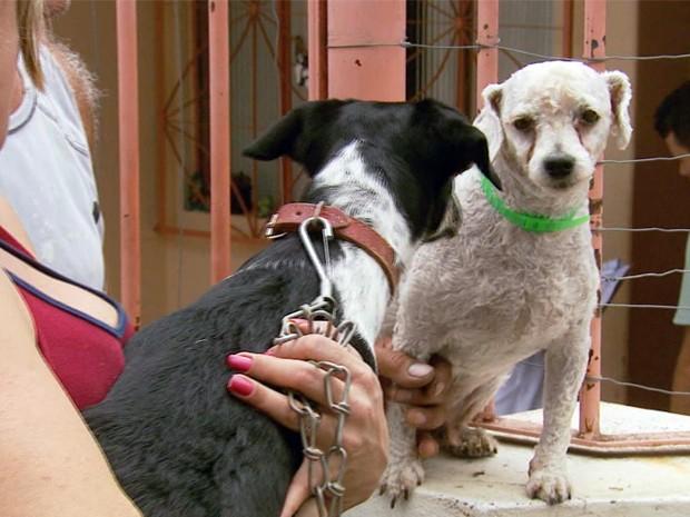 Número de cães com leishmaniose preocupa autoridades em Lavras, MG (Foto: Reprodução EPTV)