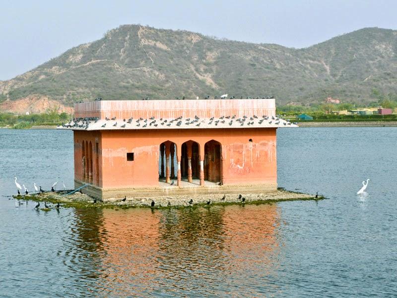 birds Platform in lake