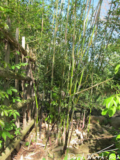 bamboo damaged from wind, insects, bugs, disease