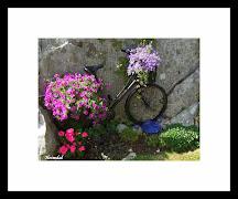 Blomeprakt