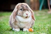 Mahkluk hidup mengalami pertumbuhan dan perkembangan - kelinci