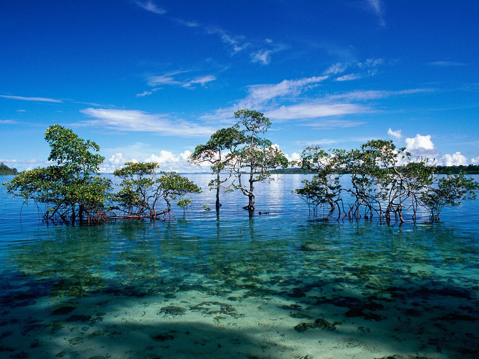 Ramblings Of Praveena Havelock Island