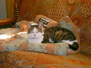Brown tabby-and-white cat sitting on folded ripple-patterned afghan, crocheted in light green, light brown and a light-green-and-brown varigated yarn.