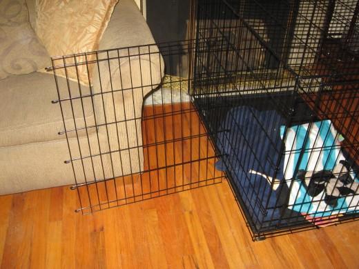 La jaula para perros ha de ser espaciosa