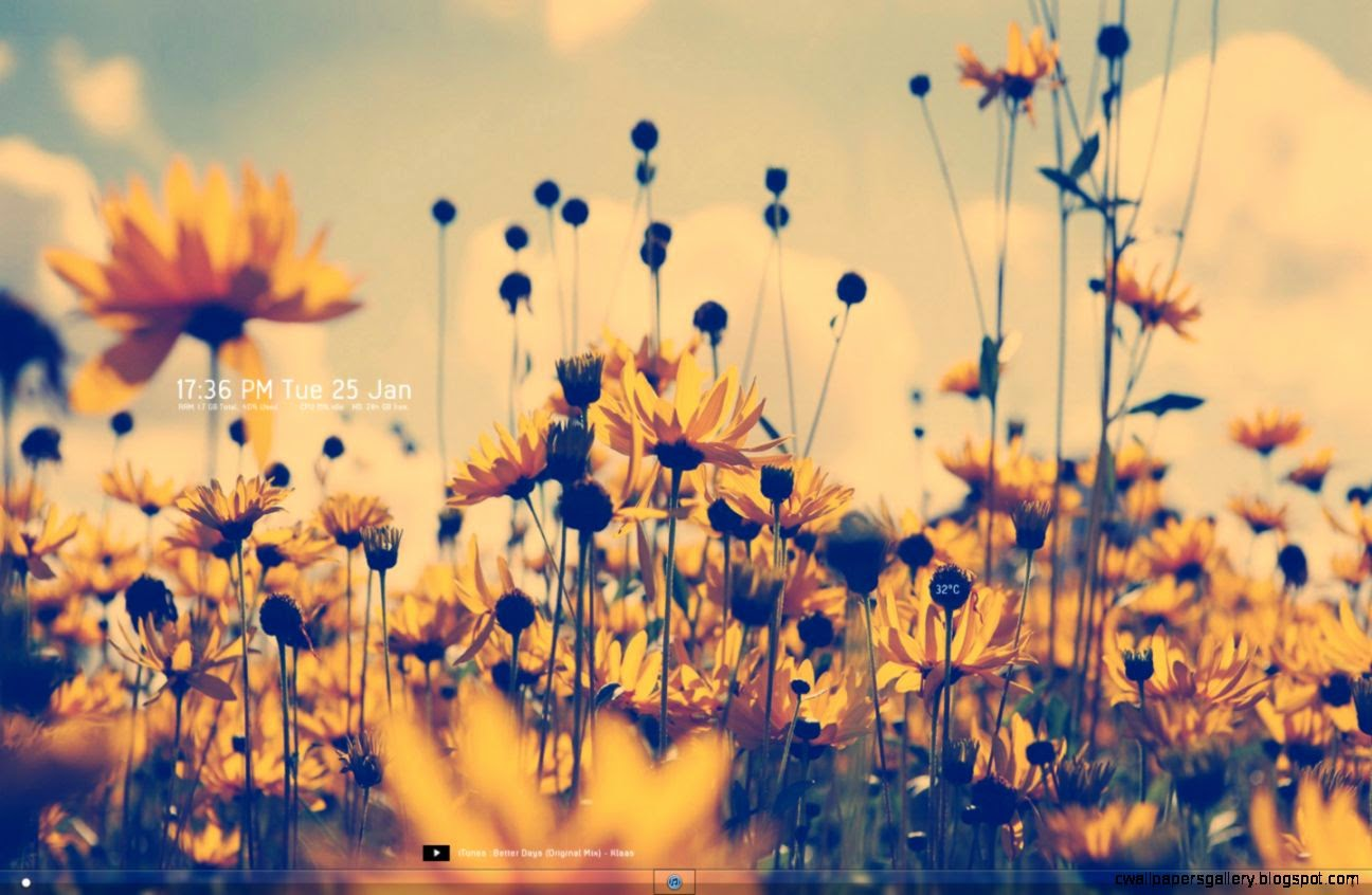 yellow flowers summer light tumblr flowers wallpapers  Free Photos