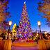 クリスマスにこのアロマを③ もみの木の秘密。キリストに贈られたもうひとつの宝物。 /バルサムファー