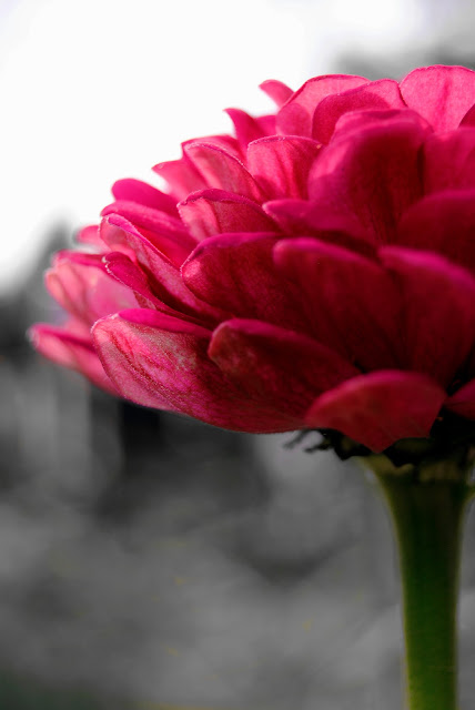 Kiedy najlepiej fotografować kwiaty?