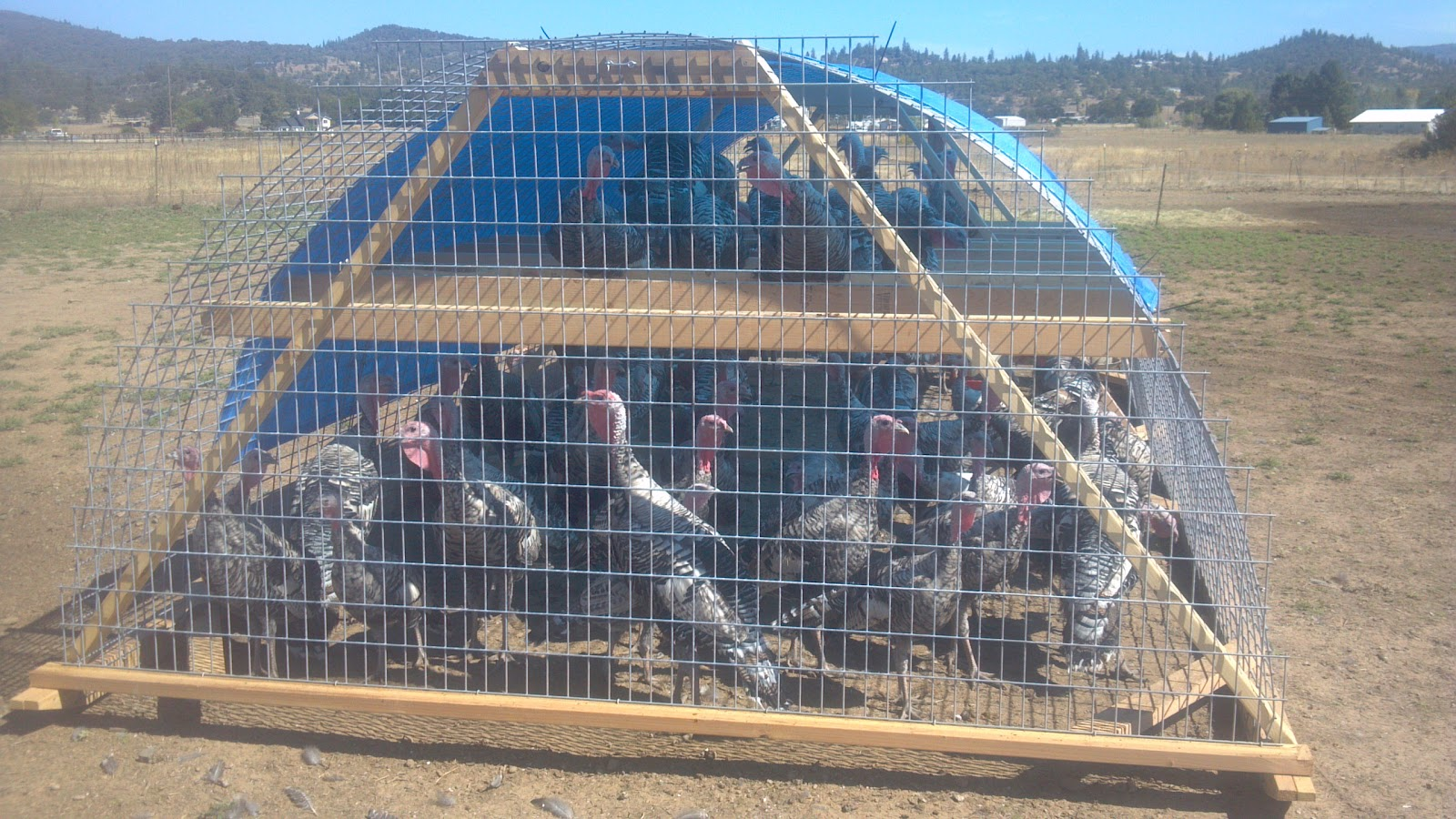 Life with little sprouts farm fourth generation turkey coop for Turkey for 12