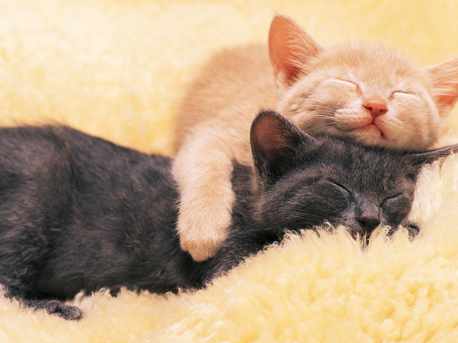 fotos de dos gatos abrazados para facebook ~ Mejores Fotos del ...