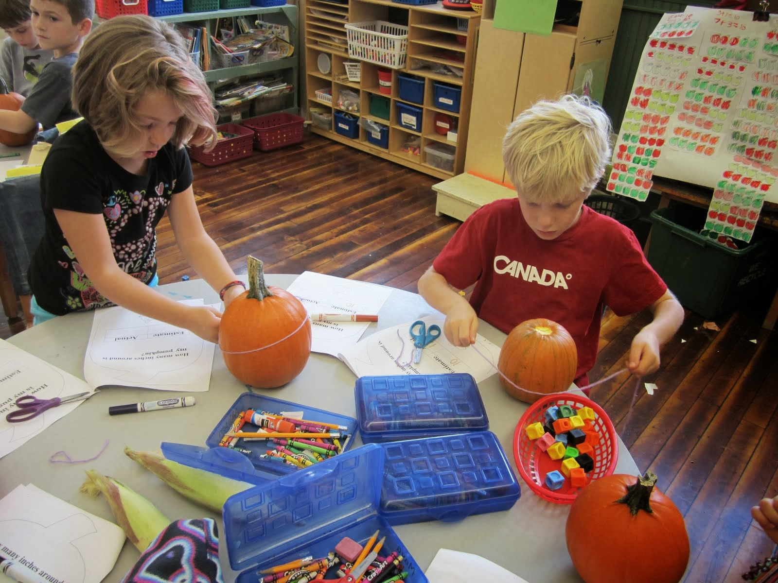 Measuring around a pumpkin!