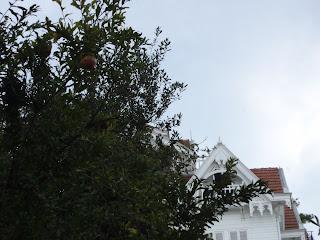 Nar Ağacı ve Beyaz Ev