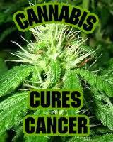 estudos com THC e CBD