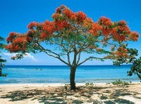 Árvore junto do Mar