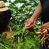 Cidade de Amparo realizará a 1ª Conferência da Agricultura