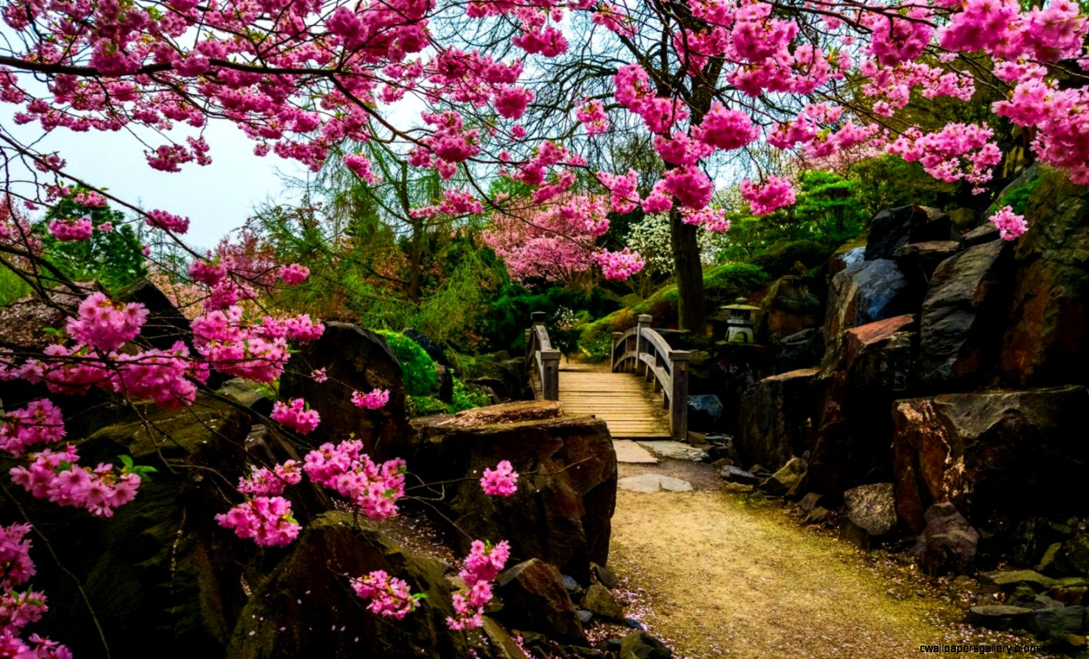 Japanese Garden Wallpaper HD Download Of Flower Garden