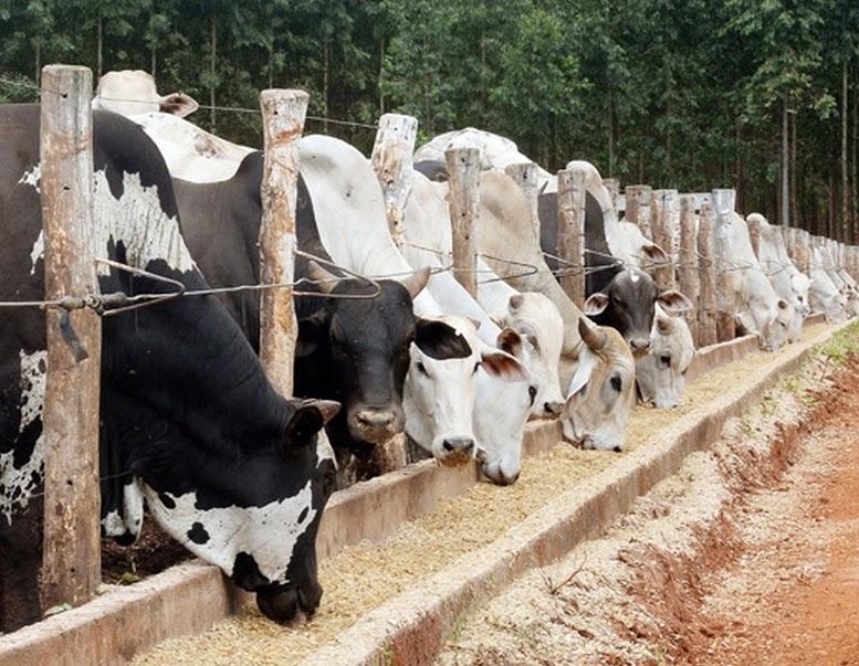 Pecuária causa impacto ambiental até 160 vezes maior que vegetais, diz estudo