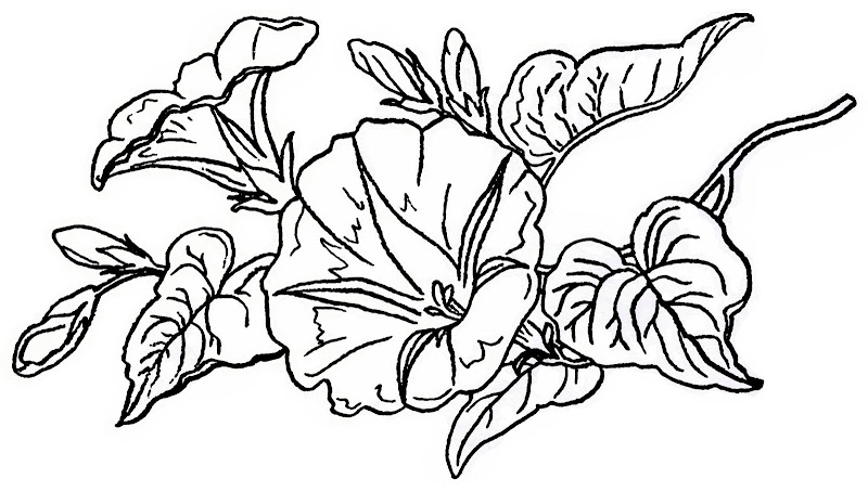 Next, I surrounded the flowers with a beautiful border . It was from a  title=