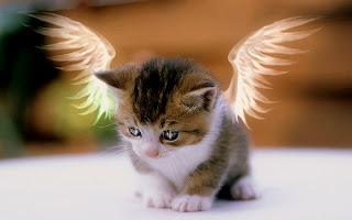 Angel Cat wallpaper