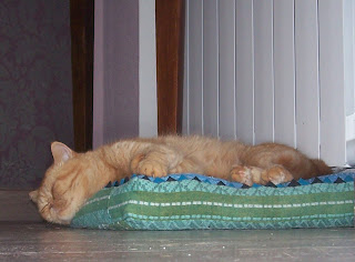 кошка kotoff net