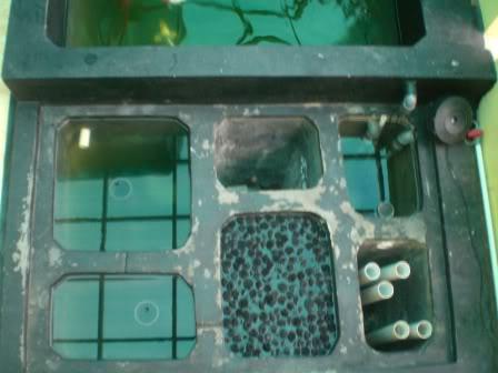 kolam filter merupakan hal penting dalam pembuatan kolam karena orang